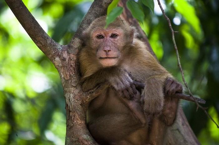 Домашняя обезьянка: как выбрать питомца и как за ним ухаживать?